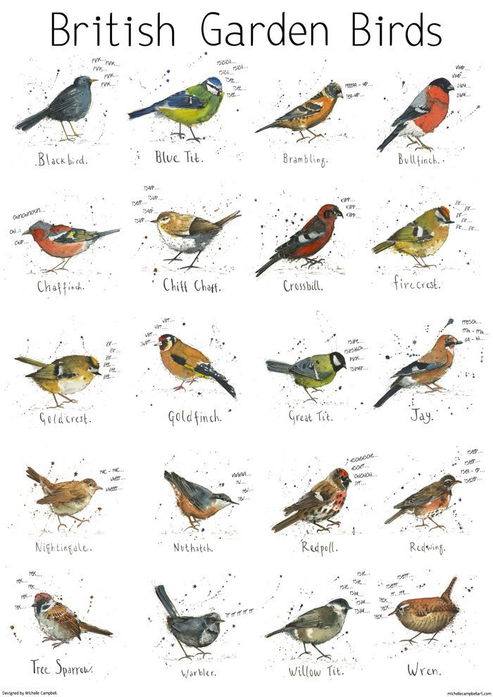 Garden Bird Print Poster via Michelle Campbell Art. Click on the image to see more!