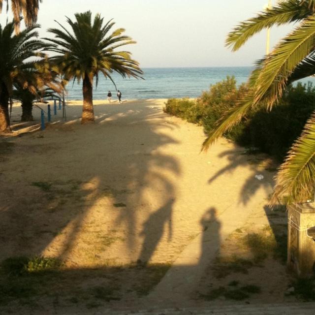 Palm Beach San Benedetto del Tronto, Bandiera Blu
