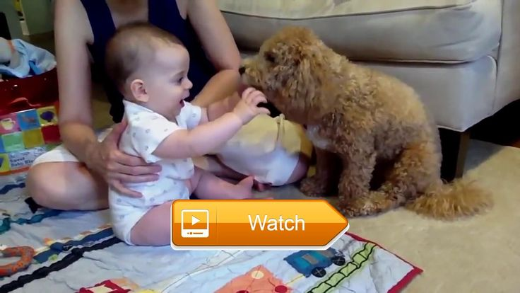 Funny Cat and Dog Videos Epic Cats and Dogs  Everyone deserves a little time to sit back and enjoy some funny videos Hope you like it Subscribe for more Check out more Funny Dog Videos  on Pet Lovers
