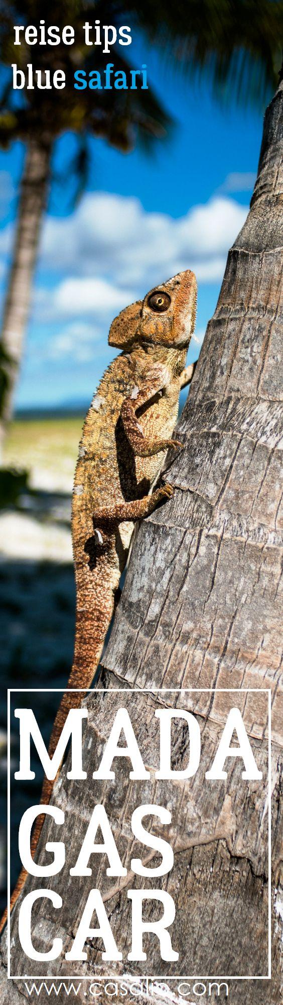 Best Travel Tip Madagascar. Luxury Safari. Luxury Travel. www.casalio.com #luxury #luxurytravel #adventure #travel #urlaub #reisen #casalio #holiday #ferienhaus #villa #rental #ferien #reisetips #madagascar