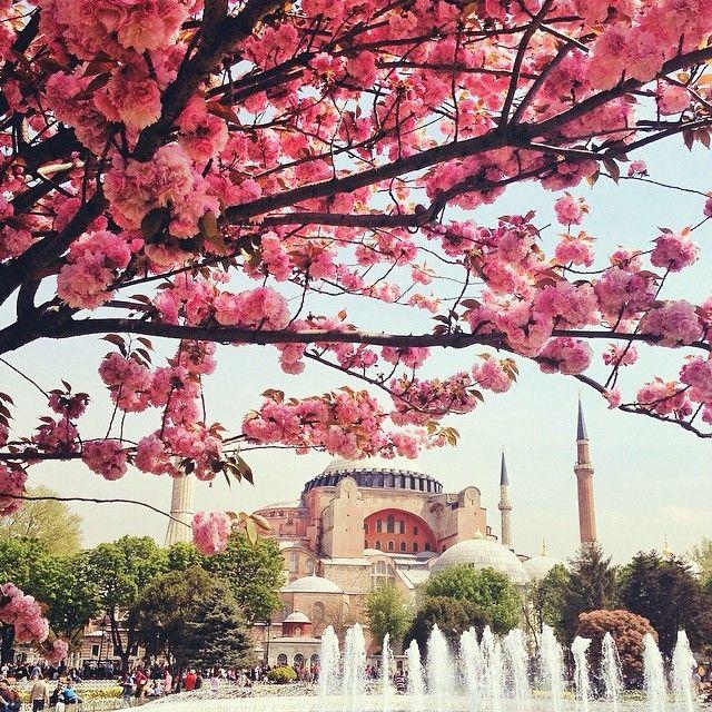 "HAGIA SOPHIA in SPRING! ""Baharda Ayasofya"" Istanbul, Turkey. Thanks to Sezgin YILMAZ [ @ sezyilmaz] for sharing this absolutely amazing instagram photo. #oldcity #sultanahmet #spring #cherry blossoms #photography #photographer #ig #iger #Istanbul #İstanbul #Turkey #Türkiye {www.armadaistanbul.com}"