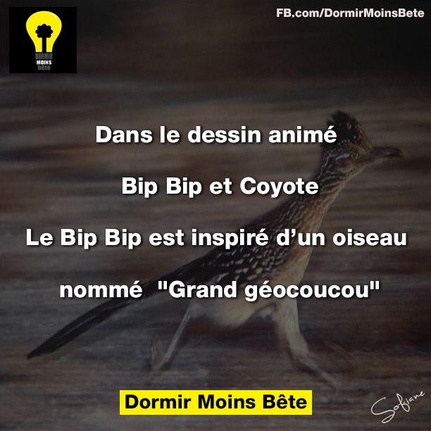 """Dans le dessin anime Bip Bip et Coyote, le Bip Bip est inspire d'un oiseau nommé """" Grand géocoucou"""""""