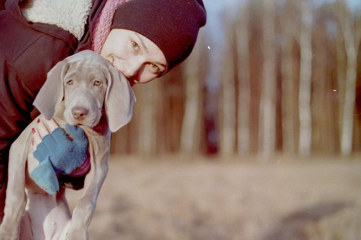 weimaraner puppy on analogue photography  http://www.studioabsynt.pl http://www.facebook.com/StudioAbsynt