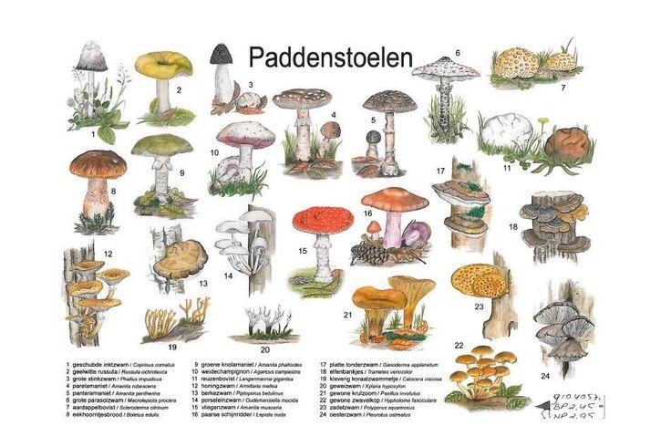 paddenstoelen zoekkaart - Google zoeken