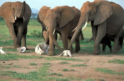 elephant 3.jpg
