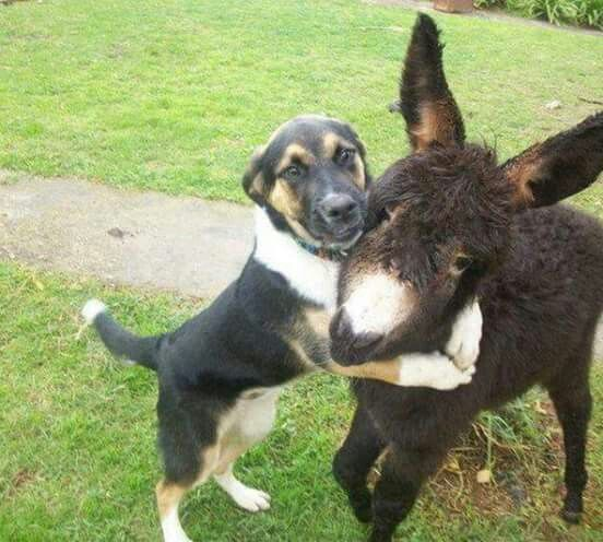 Dog and his donkey.....                                                                                                                                                     More