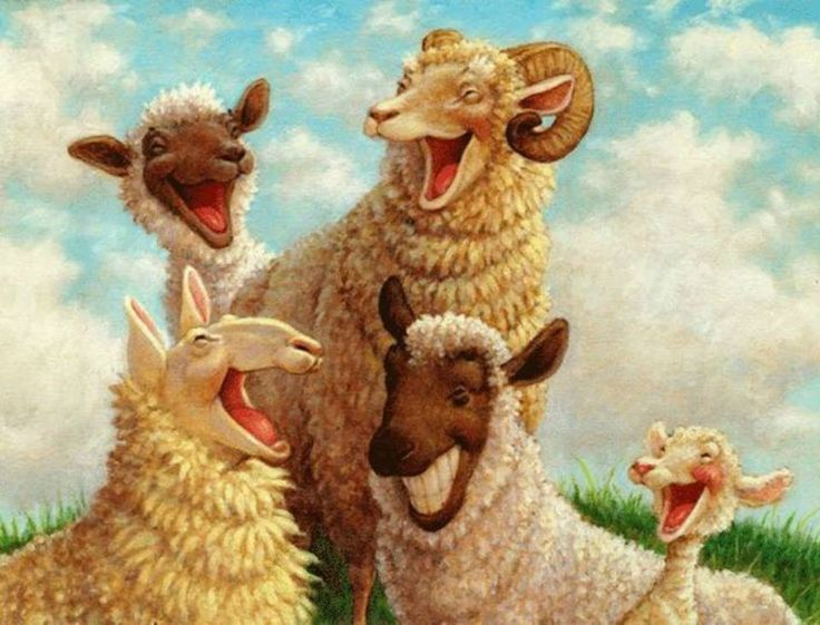 Image result for laughing sheeps