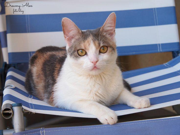 Mila - plażowiczka, wygrzewająca futerko na leżaczku ;)