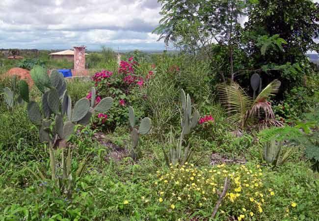 Marizá Epicentro de Cultura e Agroecologia – A Permacultura é um sistema de design, com o foco no uso sustentável da terra e uma vida sustentável.
