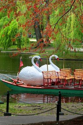 Boston's majestic swanboats have delighted children and their parents for many decades.