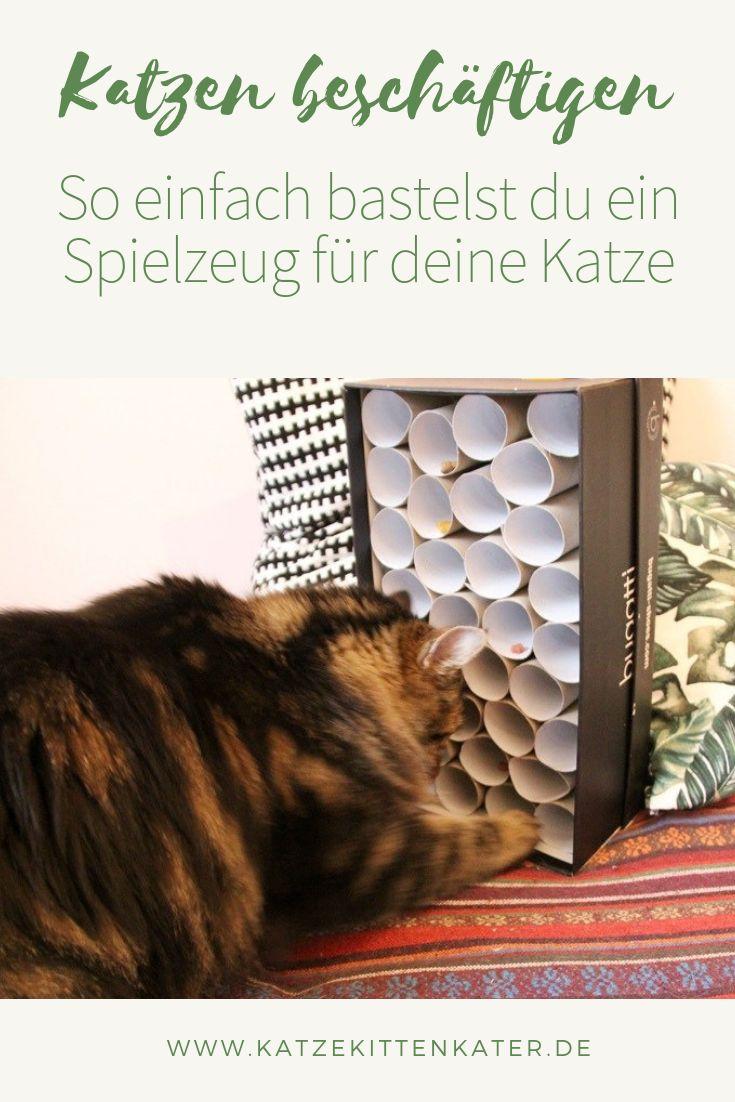Beschäftige Katzen   – Blog katze kitten kater