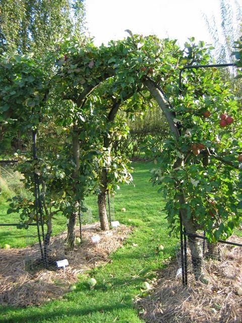Apple Tree Archway.