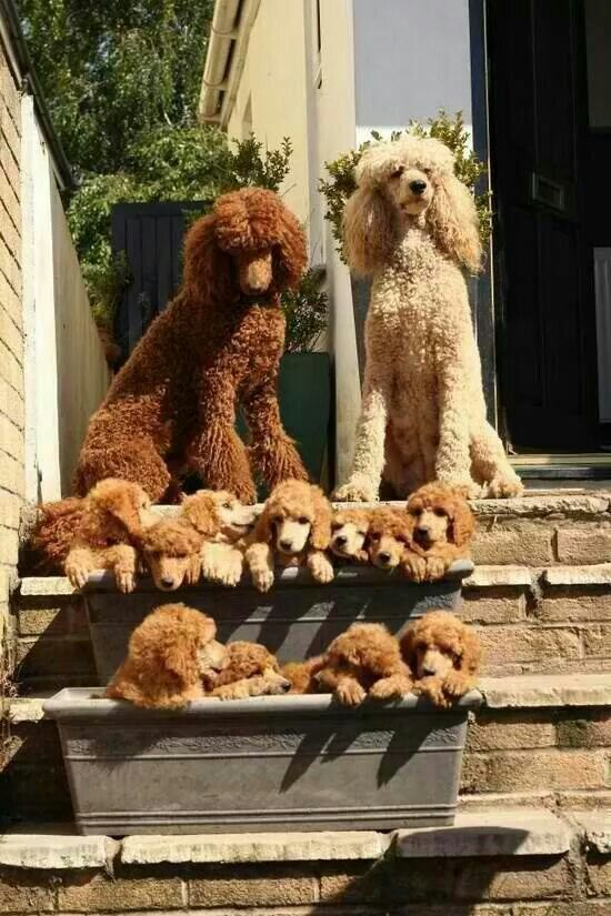 Wow! Now this is a family!