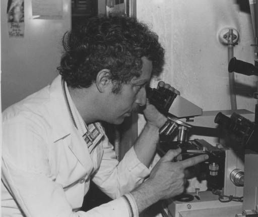 Dr. Steven Oppenheimer, pictured in his laboratory looking through a microscope, began his career at San Fernando Valley State College (now CSUN) in 1971. Continuing his post-graduate work, Dr. Oppenheimer's research focused on cell adhesion. He has been recognized as a CSU System Trustees Outstanding Professor and as a Fellow of the American Association for the Advancement of Science. University Archives.