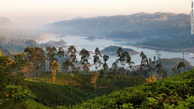 The leaves that make up a simple cup of tea play a surprisingly complex role in the history of Sri Lanka.