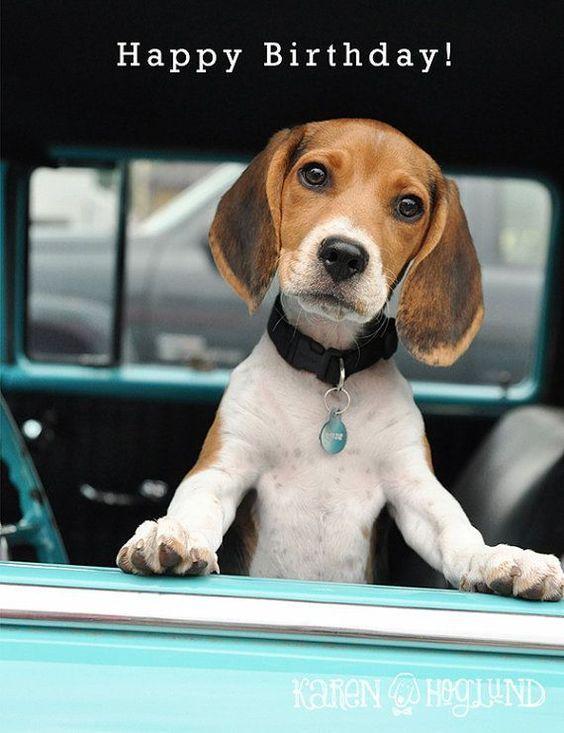 25 Happy Birthday Wishes Dog Birthday Cakecupcakes Beagle