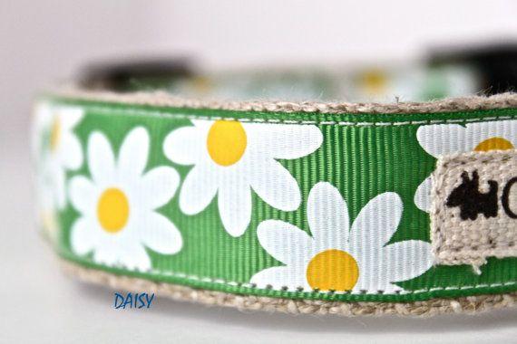 1 Hemp Width Collar / Daisy Dog Collar / Floral by GreenBeanDog