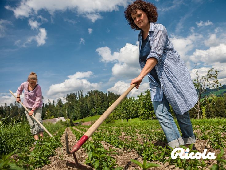 Ricola herb farmers repeat the arduous weeding process many times before the herbs are ready for harvest. They also regularly change the variety of herb to guarantee sustainable and natural cultivation. #Herbs #Weeding #Ricola