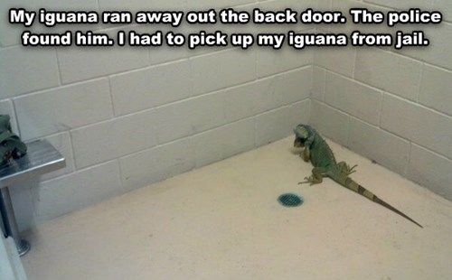 """Thank goodness you sprung me before those bearded dragons showed up. Did you call the lawyer yet?"" (via Daily Picks And Flicks)<<this comment made it a thousand times better"
