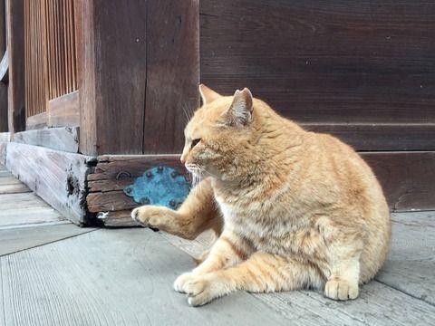 護国寺にいた猫