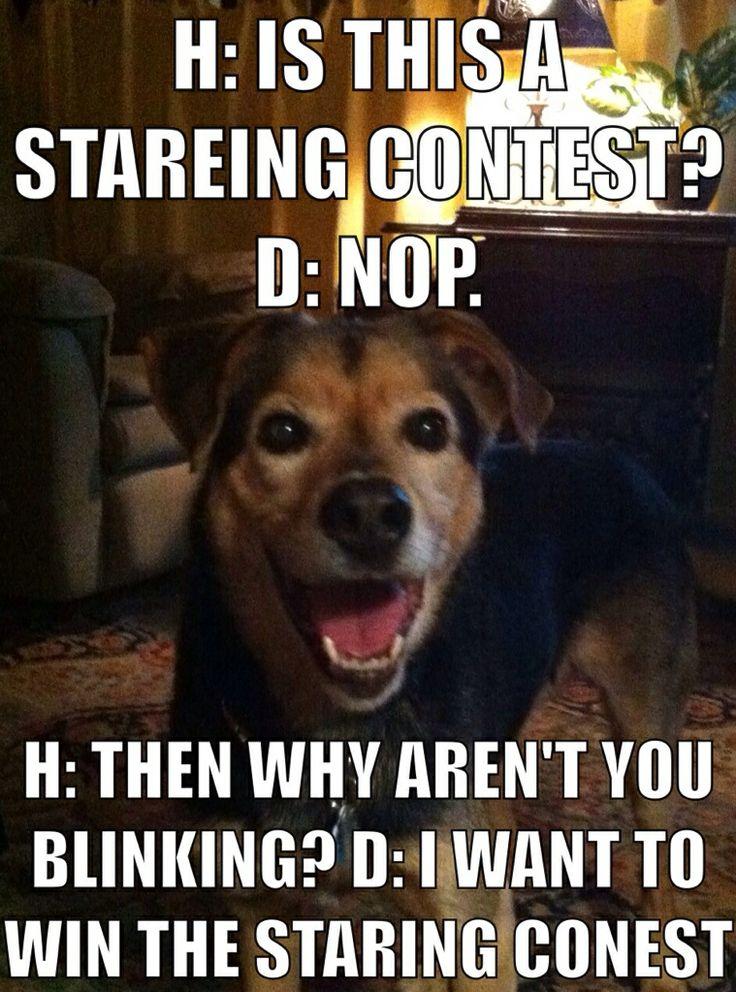 Chundo in staring contest