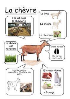 Fiche chèvre