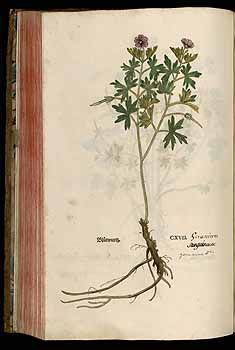 184533 Geranium sanguineum L. / Fuchs, L., New Kreüterbuch, t. 117 (1543)