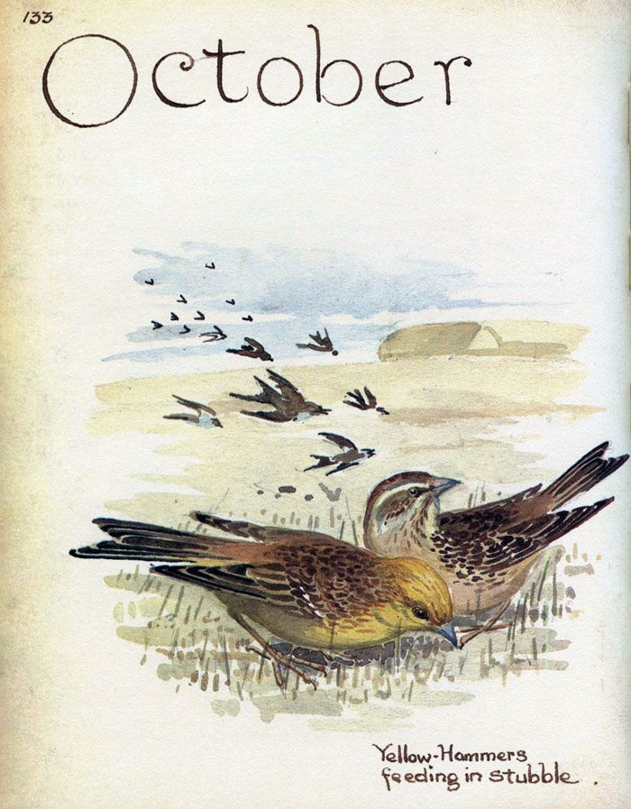 Waterfinches -_Morning Earth Artist/Naturalist Edith Holden