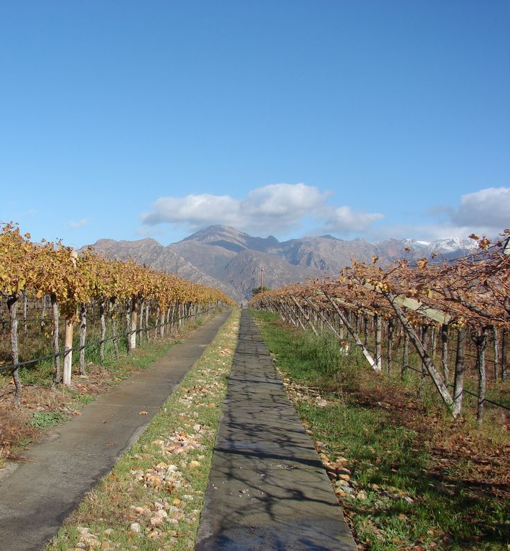 Autumn on an export grape farm in South Africa