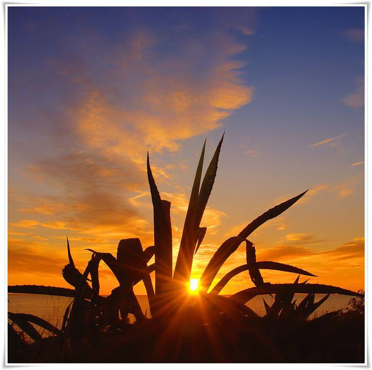 Sunrise... (Sòl de Riu/Alcanar) Catalonia. Instagram: gregsobieraj_photography