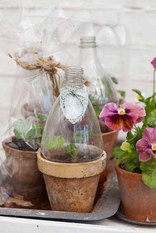 Mini-Gewächshaus aus Plastikflaschen...