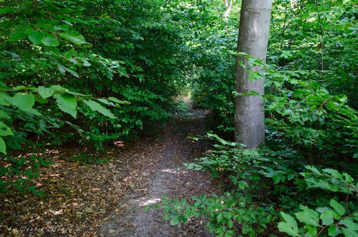 Ibanesti Forest. Padurea din Ibanesti, Botosani