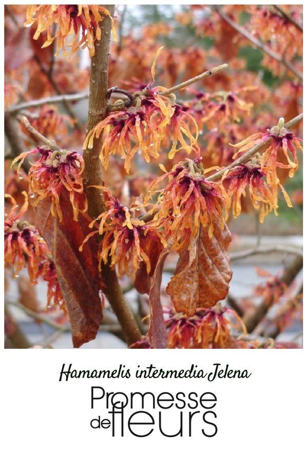 Une merveille hamam lis hiver l 39 hiver au jardin for Hiver au jardin