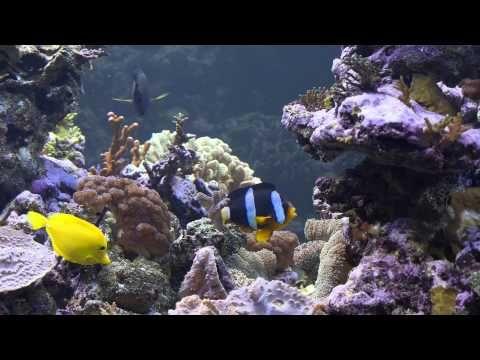 Pasi Haillan merivesiakvaario – Lemmikkimedia