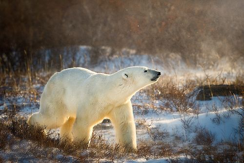 King Of The Arctic by Steve Perry