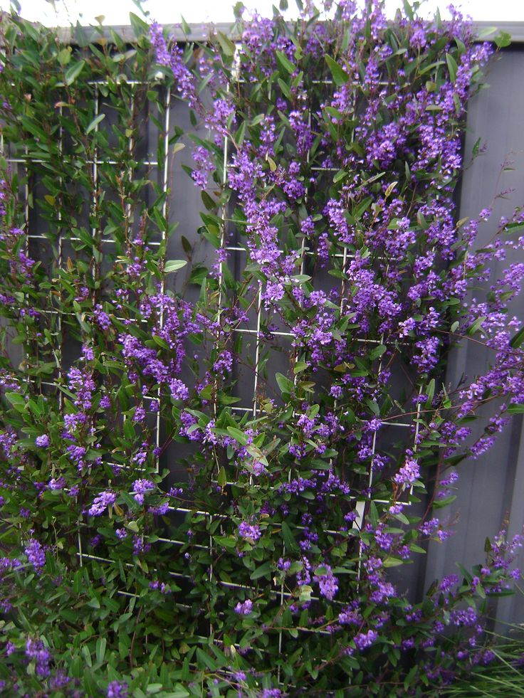 Hide your ugly fence with this no drill solution for colourbond steel fencing simple to - Garden ideas to hide fence ...
