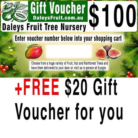 Before Christmas each year we do this special on gift vouchers that are sent instantly by email to you. Later you can forward or print out the voucher and give it to someone special on Christmas Day. The $20 voucher is sent as a separate email to you as well. There are a few other Christmas voucher specials that may suit just go to @daleysfruit website and search voucher #daleysfruit #giftvouchergiveaway #giftvoucher #fruittrees #gardeningaustralia