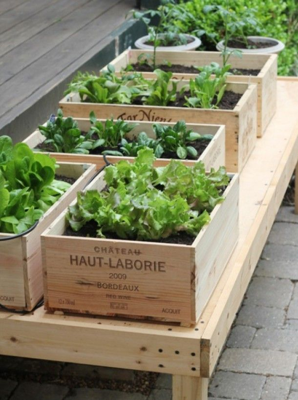 -- wine crate herb garden - genius!!