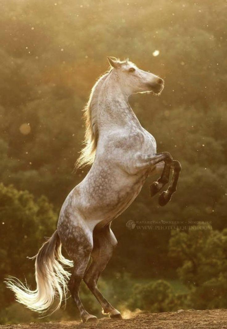 s;p tookhuay.com - ถูกหวย ทุกหวย รวยไปกับเรา หวยออนไลน์  | สัตว์, ม้า, รูปสัตว์น่ารัก