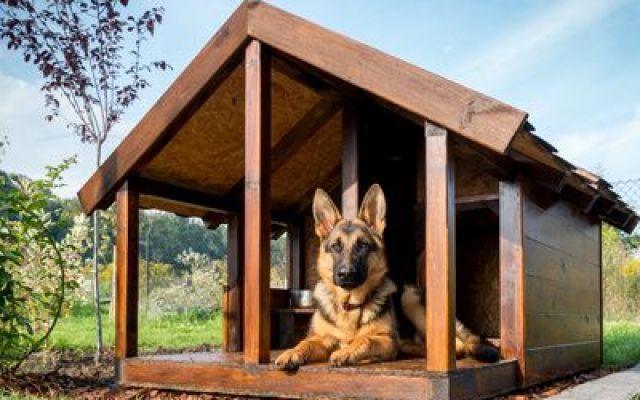 Caratteristiche e corretto posizionamento delle cucce per cani da esterno In questo articolo vedremo che caratteristiche deve avere una cuccia per cani da esterno, soprattutto come posizionarla e quali accorgimenti usare contro umidità, sole, pioggia e vento. Una cuc #cuccepercanidaesterno