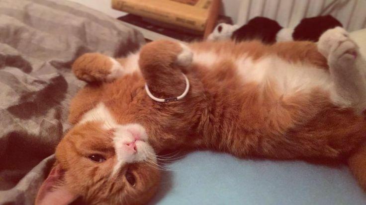 Soms denk ik dat Sammy in zijn vorig leven een model is geweest #zwoeleblik #cats