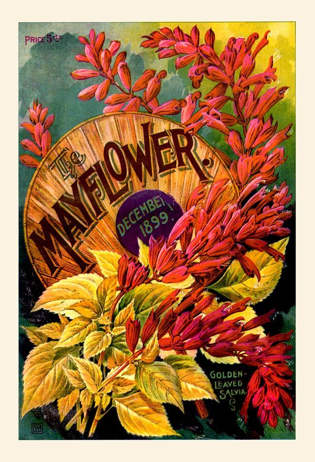 Mayflower Garden Flower Catalog vintage cover art 1899-12