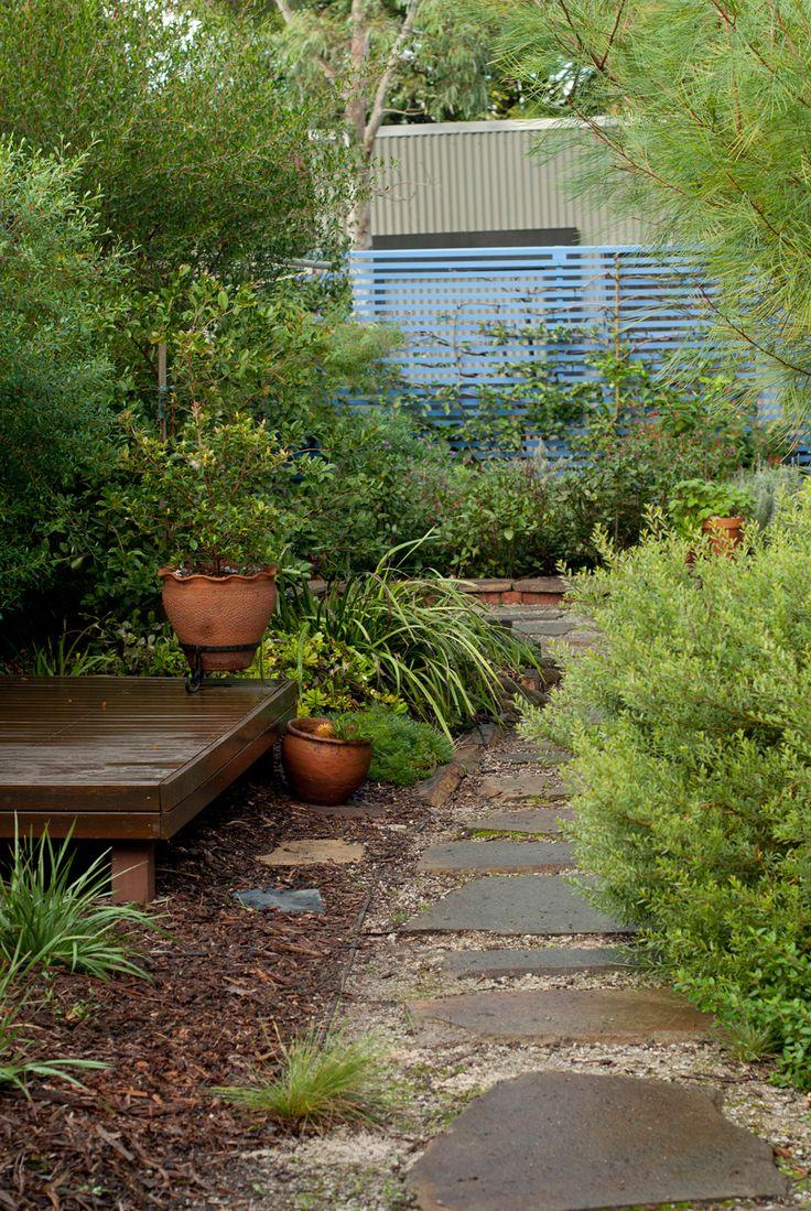 Garden Ideas Australian Native 95 best australian native flora images on pinterest | flora