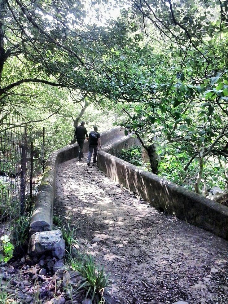 puente romano por los alcornoques