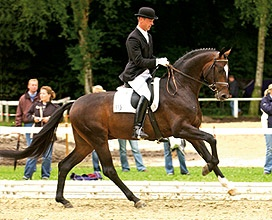 Sir Donnerhall  OLD *01 Sandro Hit - Donnerhall www.HWfarm.com Selected Quality Horses for sale from only the best producing bloodlines. Horses are all sane and tractable with good manners and gorgeous conformation. All are well started and ready to continue on up the levels. Pics & videos!!!