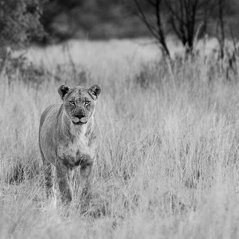 62 best pilanesberg game reserve images on pinterest game image from the photographers guide to the pilanesberg national park ebook and captured by edward peach our coauthor peached fandeluxe Ebook collections