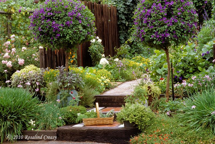 153 Best Images About Ornamental Edibles On Pinterest 400 x 300