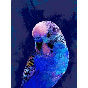 Bright Blue Budgie Canvas Wall Art