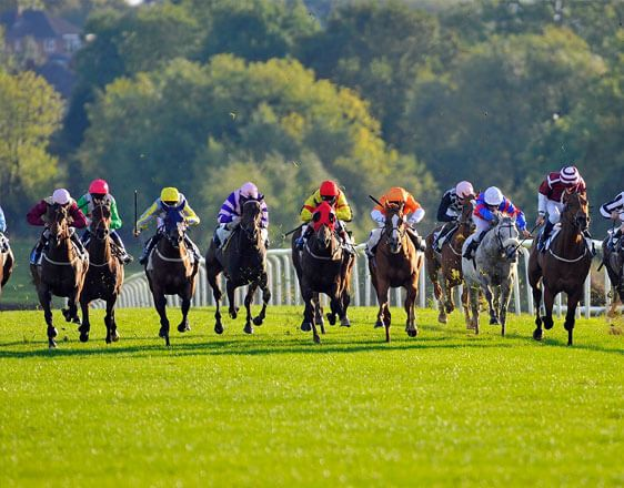 Discover key details and the best horse racing tips from real experts. Learn how to win with incredible info about races in Leicester, Newcastle, Plumpton on Nov 14