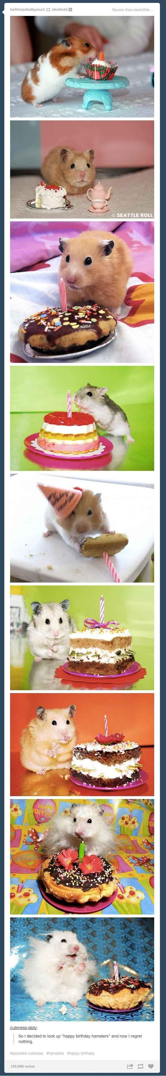"And perhaps the most satisfying search of all: ""So I decided to look up 'happy birthday hamsters' and now I regret nothing."" 